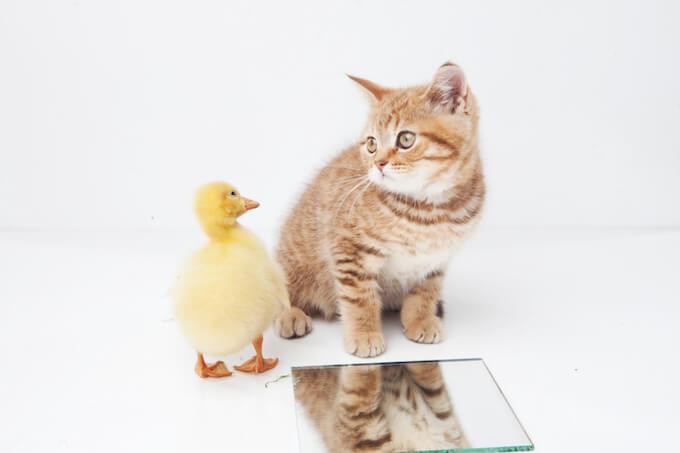 ネコとアヒル